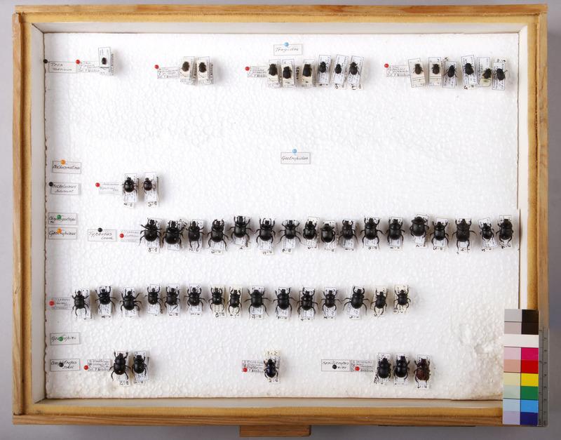 http://www.arca.museus.ul.pt/ArcaSite/obj/CxsEntomol/MUHNAC-MB07-CM-CX001.JPG