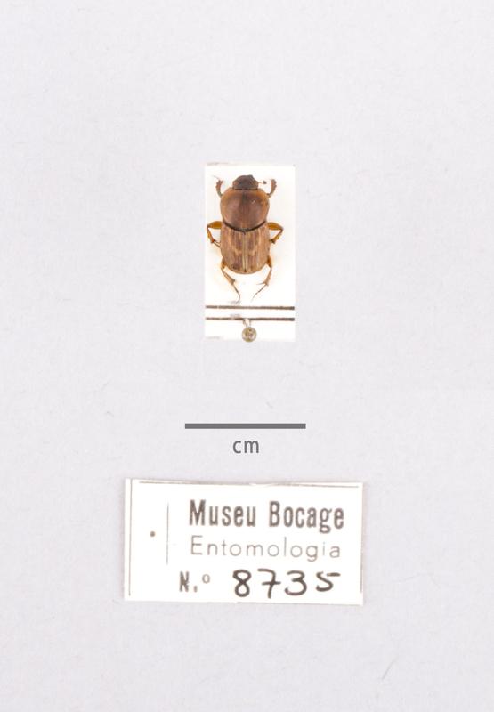 MB07-008735-01.jpg