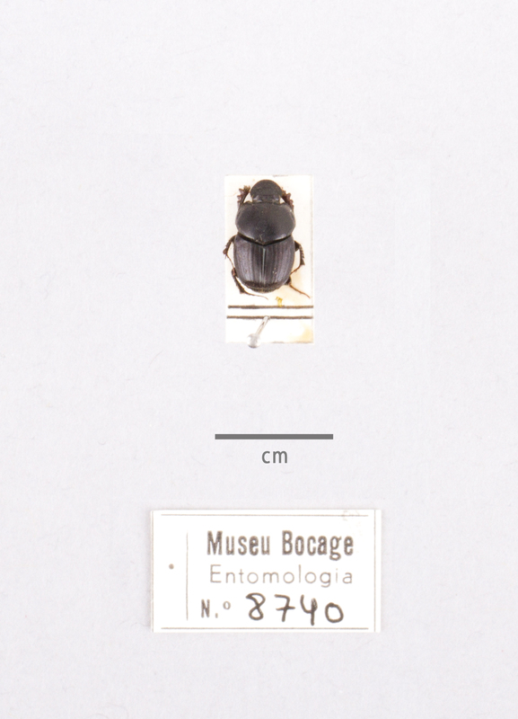 MB07-008740-01.jpg