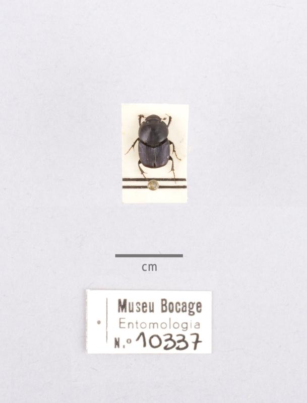 MB07-010337-01.jpg