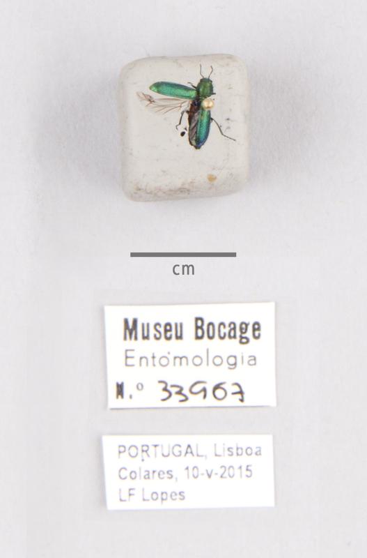 MB07-033907-01.jpg