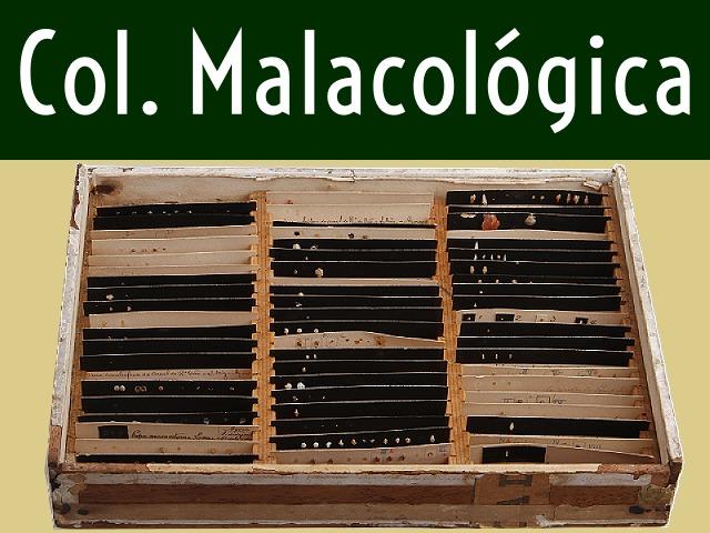 Título da Seção Coleção Malacológica