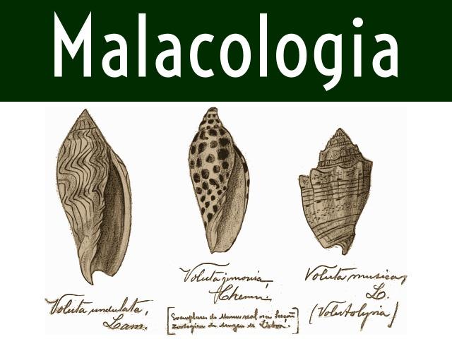 Título da seção de Malacologia