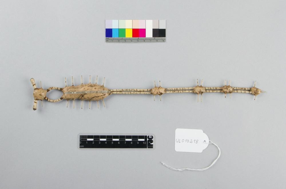 http://www.arca.museus.ul.pt/ArcaSite/obj/auzoux/MUHNAC-0001923-MB-IMG-web.JPG