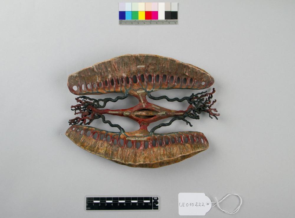 http://www.arca.museus.ul.pt/ArcaSite/obj/auzoux/MUHNAC-0001929-MB-IMG-web.JPG