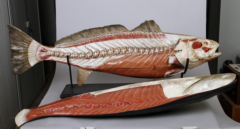 http://www.arca.museus.ul.pt/ArcaSite/obj/auzoux/MUHNAC-0001933-MB-IMG-web.JPG