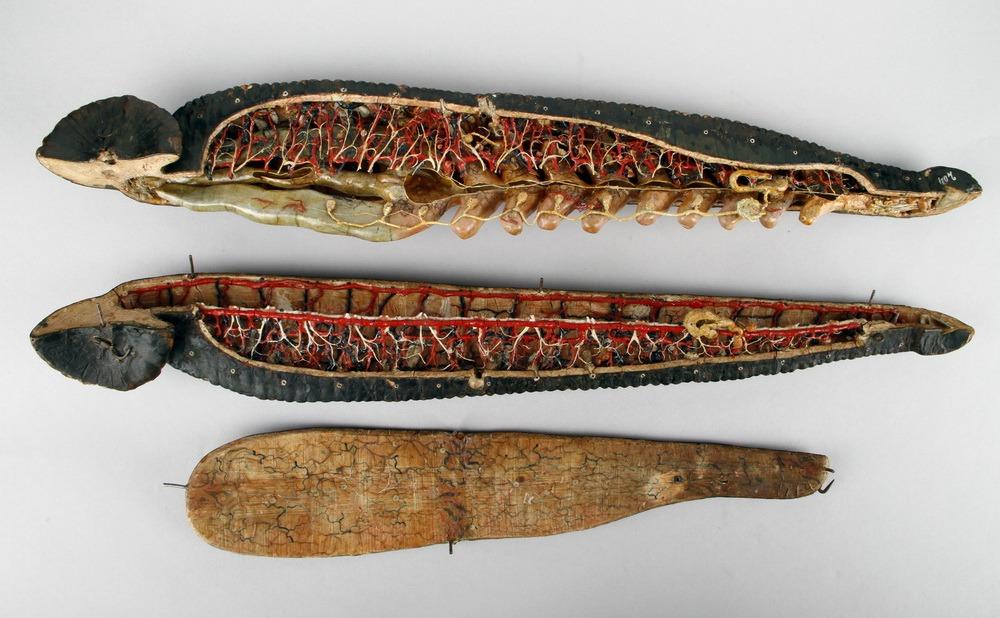 http://www.arca.museus.ul.pt/ArcaSite/obj/auzoux/MUHNAC-0001951-MB-IMG-web.JPG