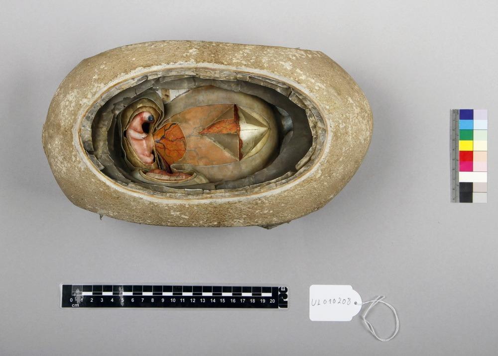 http://www.arca.museus.ul.pt/ArcaSite/obj/auzoux/MUHNAC-0001954-MB-IMG-web.JPG