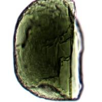 http://www.arca.museus.ul.pt/ArcaSite/obj/anfi/MUHNAC-0002588-MG-IMG-web.JPG
