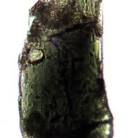 http://www.arca.museus.ul.pt/ArcaSite/obj/anfi/MUHNAC-0002590-MG-IMG-web.JPG