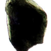 http://www.arca.museus.ul.pt/ArcaSite/obj/anfi/MUHNAC-0002591-MG-IMG-web.JPG