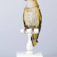 http://www.arca.museus.ul.pt/ArcaSite/obj/aves/MUHNAC-0000700-MB-IMG-web.JPG