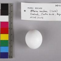 http://www.arca.museus.ul.pt/ArcaSite/obj/aves2/MUHNAC-0002132-MB-IMG-web.JPG