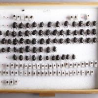 http://www.arca.museus.ul.pt/ArcaSite/obj/CxsEntomol/MUHNAC-MB07-CM-CX008.JPG