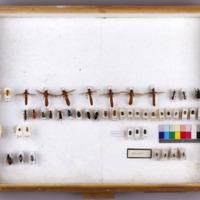 MUHNAC-MB07-CM-CX134.JPG