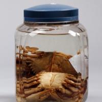 http://www.arca.museus.ul.pt/ArcaSite/obj/crust2/MUHNAC-0002320-MB-IMG-web.JPG