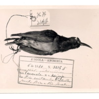 http://www.arca.museus.ul.pt/ArcaSite/obj/ahfotos/MUHNAC-0002607-MB-IMG-web.JPG