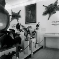 Fotografia da sala dedicada ao Museu Bocage (actual Departamento de Zoologia e Antropologia do Museu Nacional de História Natural e da Ciência) na  Exposição do Mundo Português (23 de Junho a 2 de Dezembro de 1940).