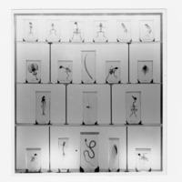 Fotografia de preparações diafanizadas de pequenos vertebrados expostas  na sala dedicada ao Museu Bocage (actual Departamento de Zoologia e Antropologia do Museu Nacional de História Natural e da Ciência) na  Exposição do Mundo Português (23 de Junho a 2 de Dezembro de 1940).