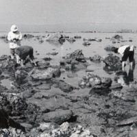 Fotografia de aula prática da cadeira de Zoologia Sistemática e Ecologia Animal do curso de Biologia da Faculdade de Ciências da Universidade de Lisboa, em Vila Nova de Milfontes, Agosto de 1949.