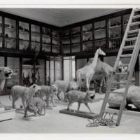 Fotografia da Sala de Exposição dos Mamíferos do Museu Bocage (secção zoológica e antropológica do Museu Nacional de História Natural) em 1935.