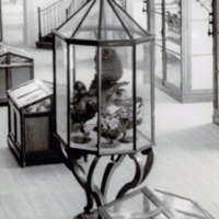 Fotografia da Sala de Exposição dos Peixes do Museu Bocage (secção zoológica e antropológica do Museu Nacional de História Natural) em 1935.