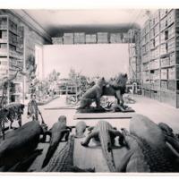 Fotografia da sala de reserva de mamíferos do Museu Bocage (secção zoológica e antropológica do Museu Nacional de História Natural) em 1956.