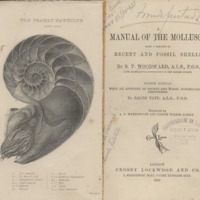 A Manual of the Mollusca being a Treatise on Recent and Fossil Shells