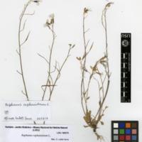 http://www.arca.museus.ul.pt/ArcaSite/obj/herb/MUHNAC-0000505-JB-IMG-web.JPG