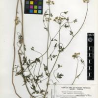 http://www.arca.museus.ul.pt/ArcaSite/obj/herb/MUHNAC-0000509-JB-IMG-web.JPG