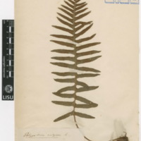 http://www.arca.museus.ul.pt/ArcaSite/obj/herb/MUHNAC-0000513-JB-IMG-web.JPG