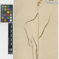 http://www.arca.museus.ul.pt/ArcaSite/obj/herb/MUHNAC-0000516-JB-IMG-web.JPG