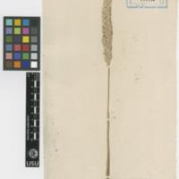 http://www.arca.museus.ul.pt/ArcaSite/obj/herb/MUHNAC-0000526-JB-IMG-web.JPG