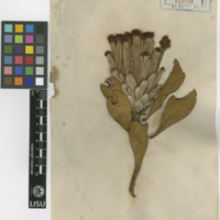 http://www.arca.museus.ul.pt/ArcaSite/obj/herb/MUHNAC-0000532-JB-IMG-web.JPG