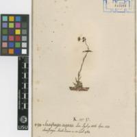 http://www.arca.museus.ul.pt/ArcaSite/obj/herb/MUHNAC-0000533-JB-IMG-web.JPG