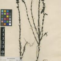 http://www.arca.museus.ul.pt/ArcaSite/obj/herb/MUHNAC-0000541-JB-IMG-web.JPG