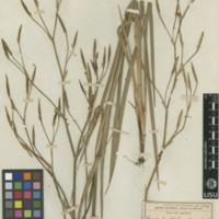 http://www.arca.museus.ul.pt/ArcaSite/obj/herb/MUHNAC-0000543-JB-IMG-web.JPG