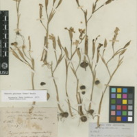 http://www.arca.museus.ul.pt/ArcaSite/obj/herb/MUHNAC-0000545-JB-IMG-web.JPG