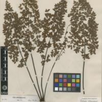 http://www.arca.museus.ul.pt/ArcaSite/obj/herb/MUHNAC-0000549-JB-IMG-web.JPG