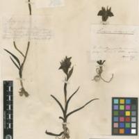http://www.arca.museus.ul.pt/ArcaSite/obj/herb/MUHNAC-0000550-JB-IMG-web.JPG
