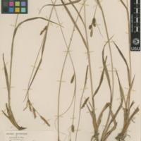 http://www.arca.museus.ul.pt/ArcaSite/obj/herb2/MUHNAC-0002451-JB-IMG-web.JPG