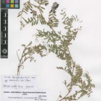 http://www.arca.museus.ul.pt/ArcaSite/obj/herb2/MUHNAC-0002464-JB-IMG-web.JPG