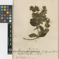 http://www.arca.museus.ul.pt/ArcaSite/obj/herb2/MUHNAC-0002469-JB-IMG-web.JPG