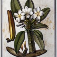 http://www.arca.museus.ul.pt/ArcaSite/obj/ah2/MUHNAC-0002232-MB-IMG-web.JPG
