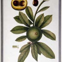 http://www.arca.museus.ul.pt/ArcaSite/obj/ah2/MUHNAC-0002252-MB-IMG-web.JPG