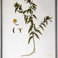 http://www.arca.museus.ul.pt/ArcaSite/obj/ah2/MUHNAC-0002254-MB-IMG-web.JPG