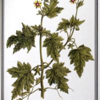 http://www.arca.museus.ul.pt/ArcaSite/obj/ah2/MUHNAC-0002273-MB-IMG-web.JPG