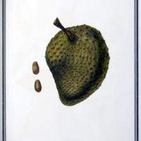 http://www.arca.museus.ul.pt/ArcaSite/obj/ah2/MUHNAC-0002275-MB-IMG-web.JPG