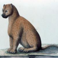 http://www.arca.museus.ul.pt/ArcaSite/obj/agua/MUHNAC-0000366-MB-IMG-web.JPG