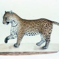 http://www.arca.museus.ul.pt/ArcaSite/obj/agua/MUHNAC-0000367-MB-IMG-web.JPG